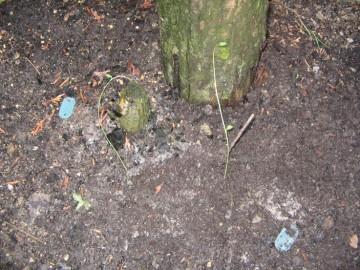 medium_fete_des_plantes_26mars2006_05.jpg