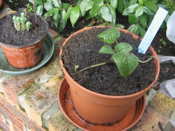 medium_fete_des_plantes_26mars2006_09.jpg
